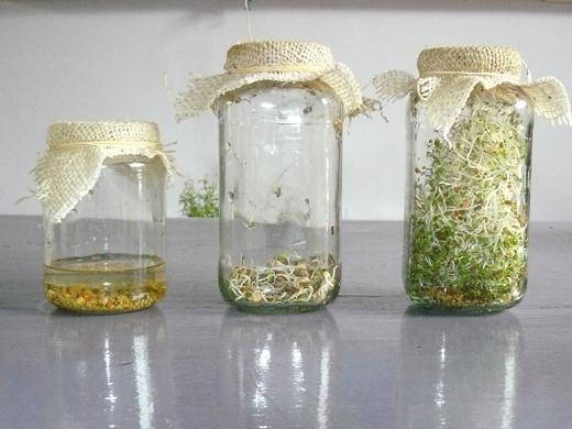 Tagarchief kiemgroenten zelf groenten kweken