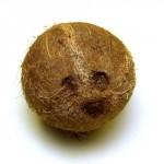 kokosnoot-ogen